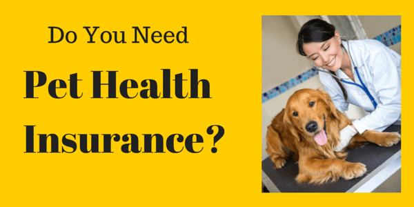 Do You Need Health Insurance For Your Pet?